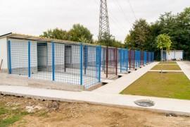 Patrupedele din adăpostul Mioveni au fost mutate în noile padocuri